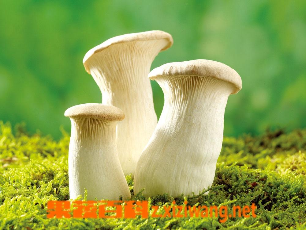 果蔬百科蘑菇